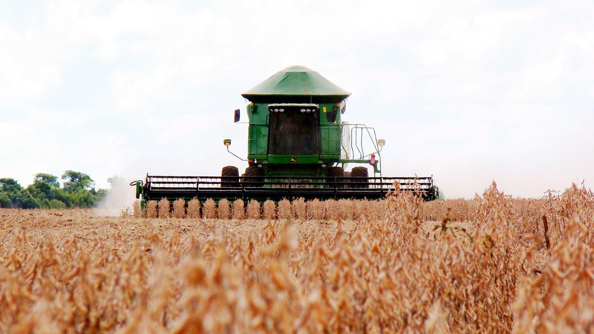 Plantio da soja 2016/17 no Brasil alcança 52,5% da área total, diz Safras
